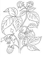 plants-coloring-pages-3