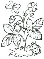plants-coloring-pages-4