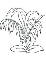 plants-coloring-pages-8