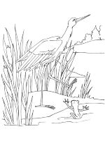 swamp-coloring-pages-9