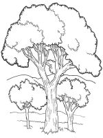 tree-coloring-pages-13