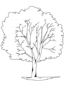 tree-coloring-pages-19