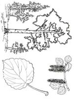 tree-coloring-pages-24