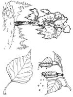 tree-coloring-pages-27