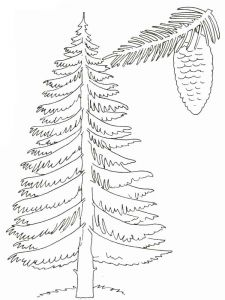 tree-coloring-pages-28