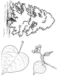 tree-coloring-pages-3