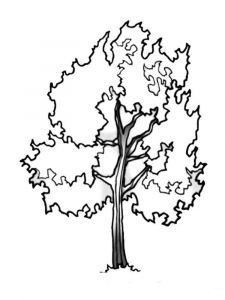 tree-coloring-pages-5