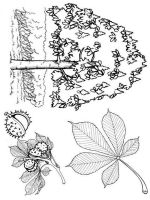 tree-coloring-pages-8