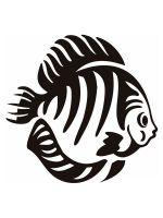 fish-stencils-5