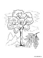 ash-tree-coloring-pages-2