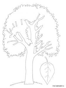 aspen-tree-coloring-pages-1
