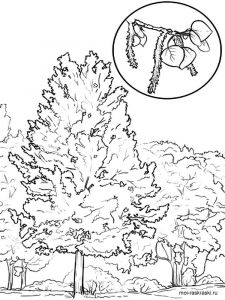 aspen-tree-coloring-pages-4