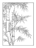 bamboo-coloring-pages-11