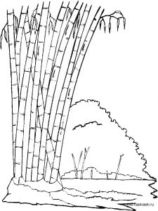 bamboo-tree-coloring-pages-2
