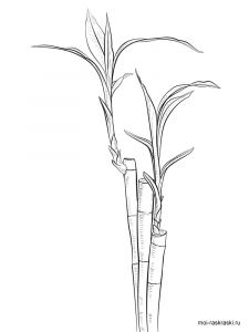 bamboo-tree-coloring-pages-5