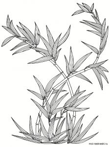 bamboo-tree-coloring-pages-6