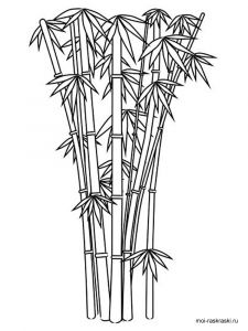 bamboo-tree-coloring-pages-7