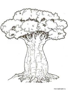 baobab-tree-coloring-pages-1