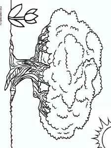 baobab-tree-coloring-pages-5