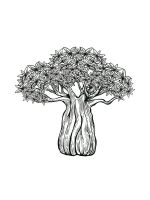 baobab-tree-coloring-pages-7