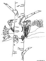 birch-tree-coloring-pages-11
