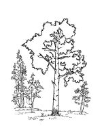 birch-tree-coloring-pages-17