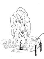 birch-tree-coloring-pages-19