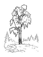 birch-tree-coloring-pages-25
