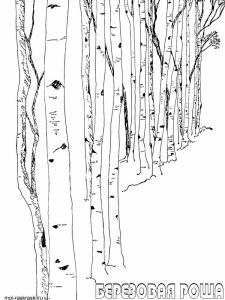 birch-tree-coloring-pages-3