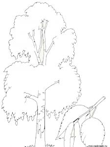 birch-tree-coloring-pages-4