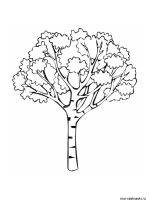 birch-tree-coloring-pages-6