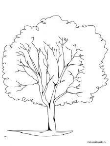 elm-tree-coloring-pages-4