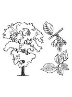 elm-tree-coloring-pages-6