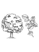 elm-tree-coloring-pages-7