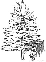 fir-tree-coloring-pages-6