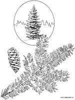 fir-tree-coloring-pages-8