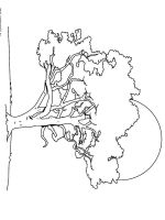 linden-tree-coloring-pages-4