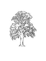 linden-tree-coloring-pages-6