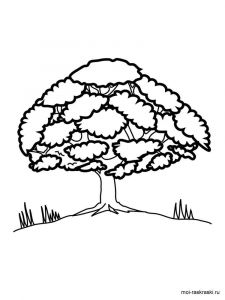 oak-tree-coloring-pages-13