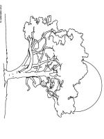 oak-tree-coloring-pages-14