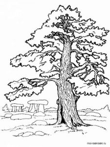 oak-tree-coloring-pages-3