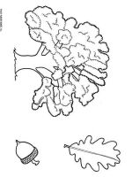 oak-tree-coloring-pages-5
