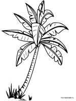 palm-tree-coloring-pages-1