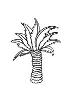 palm-tree-coloring-pages-25