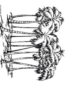 palm-tree-coloring-pages-5