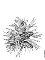 pine-tree-coloring-pages-2