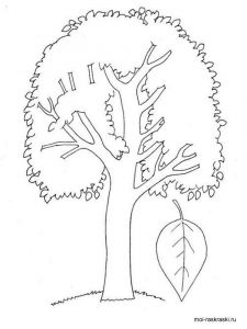 poplar-tree-coloring-pages-3