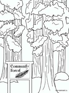 sequoia-tree-coloring-pages-1