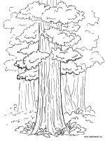 sequoia-tree-coloring-pages-5