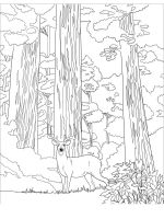 sequoia-tree-coloring-pages-8